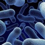 micro-organismo